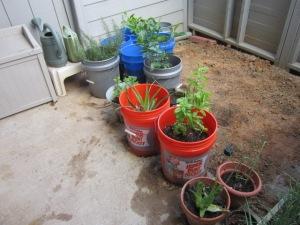 This year's HeatCageKitchen garden